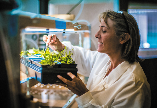 Hope Jahren checks the status of plants in her lab.