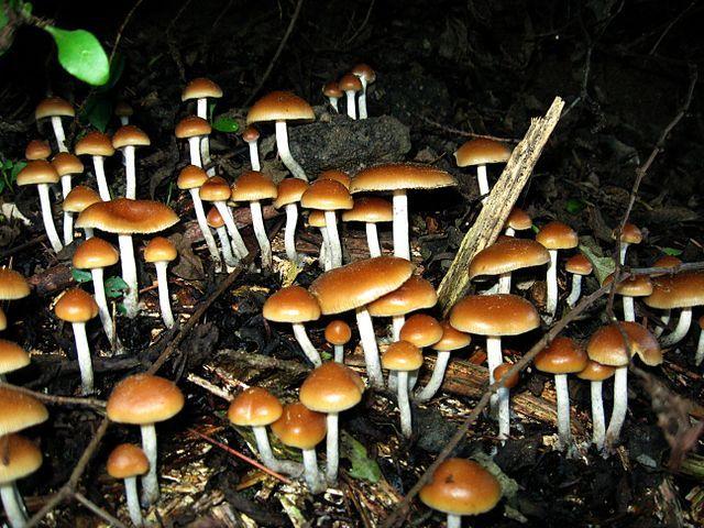 For treatment-resistant depression, magic mushroom drug holds promise