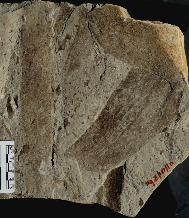 Just a couple of 1.56 billion-year-old fossils from southern China.