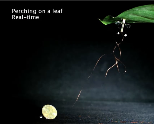Small, insect-like robot can now latch on to overhangs