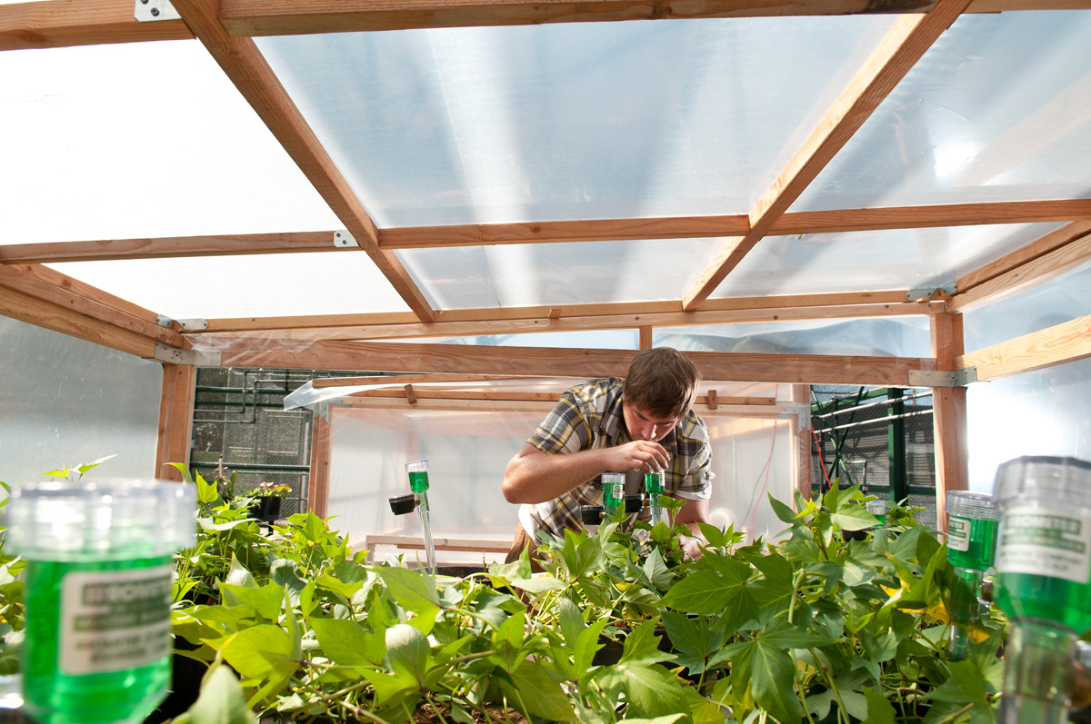 One of the high-tech greenhouses in the Jahren Lab.