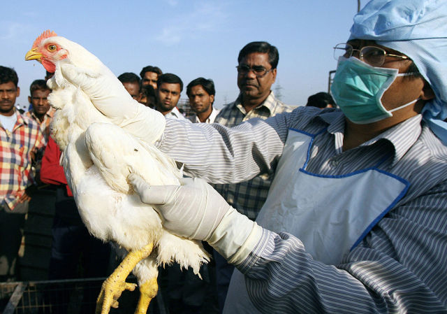 The case of the vanishing pandemic: Deadly bird flu flies the coop in the US