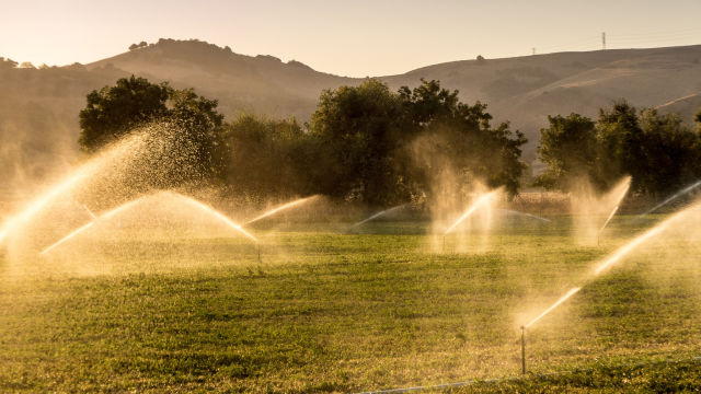 IBM's Watson fed images to estimate water use efficiency in California