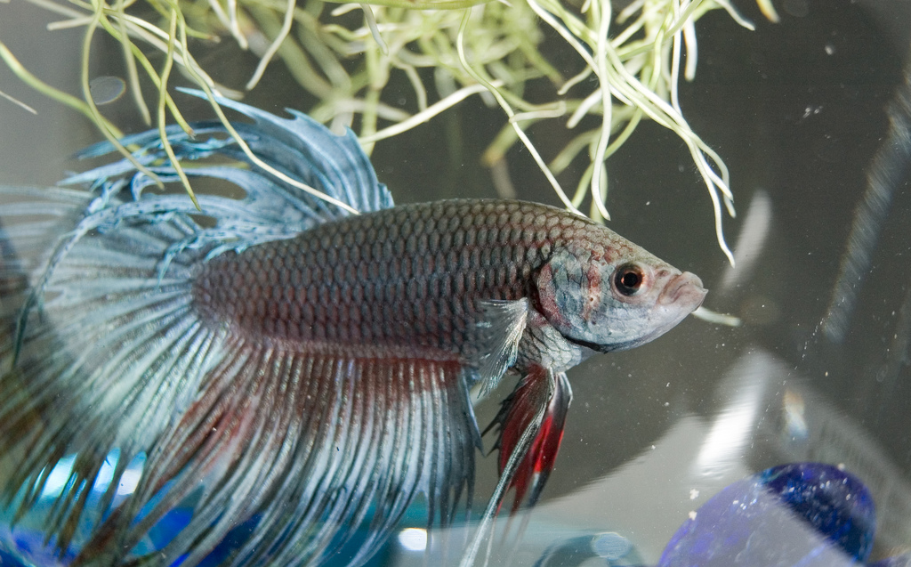 Judge tosses lawsuit over 1 star yelp review for for Pet betta fish