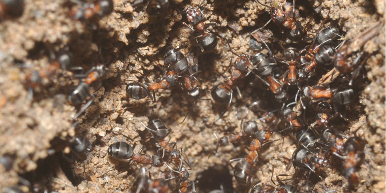 Bizarre ant colony discovered in an abandoned Polish nuclear weapons bunker