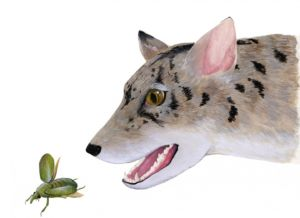 This frisky, fox-sized critter is an artist's reconstruction of the 38-million-year-old Texas beardog, based on the newly classified fossils <em>Angelarctocyon australis</em> and <em>Gustafsonia cognita</em>.