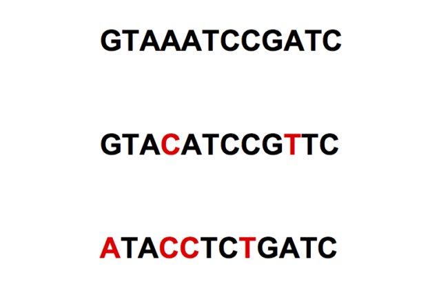 Three related sequences, with base differences relative to the first sequence highlighted.