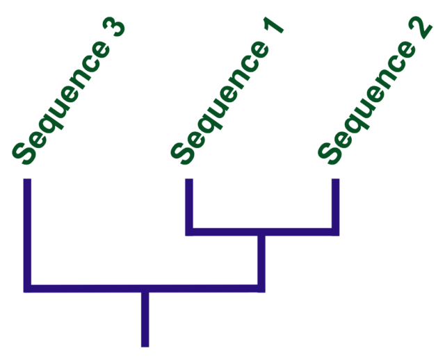 A tree based on these DNA sequences. Note that sequence 1 and 2 are equally distant from 3.