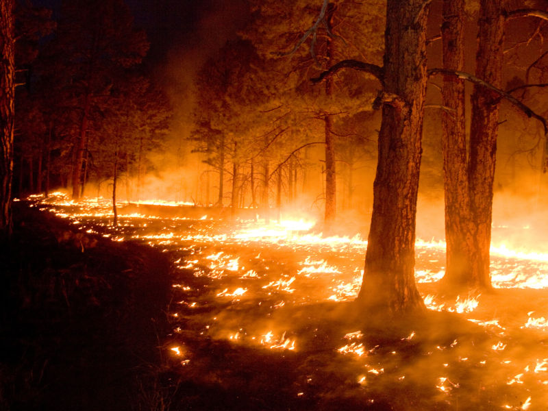 Huge area of US West burned due to warming climate