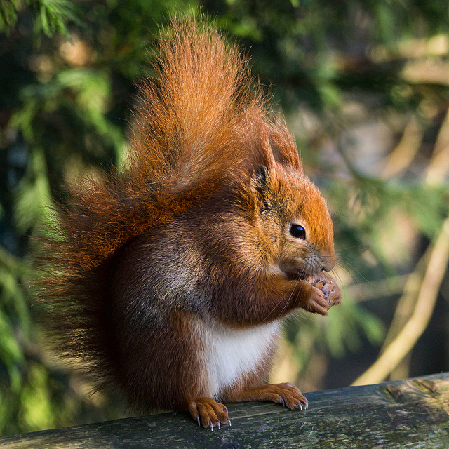 Squirrels may not be as harmless as they appear