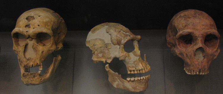What happened to all the Neanderthal genes?