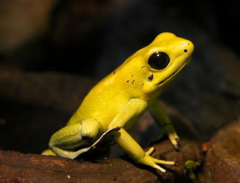 The poison arrow frog's toxin has an anti-toxic evil twin