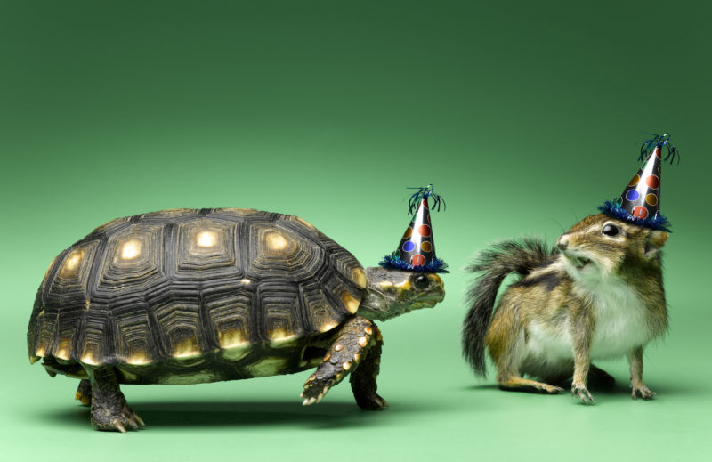 Ain't no party like a turtle and chipmunk party