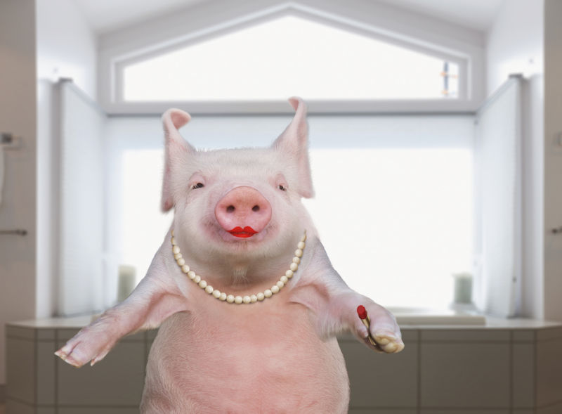"""""""Lipstick on a pig"""": Time Warner Cable """"deceived the FCC"""" in speed tests"""