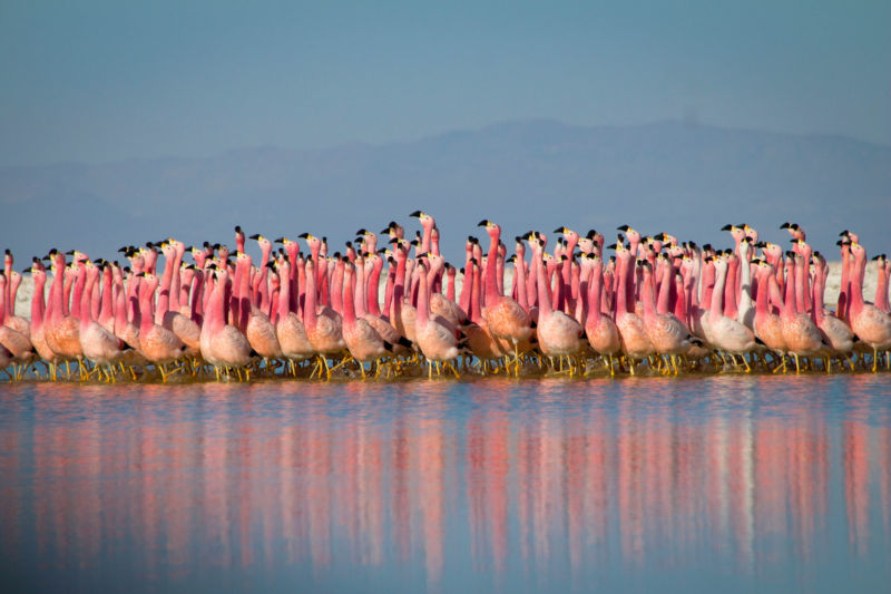 "This flamingo colony runs in a nearly perfect formation as a ""parade"" of sorts. It's even more stunning in motion—and that much more stunning if you get to see the birds' perfect pink tones on an HDR-10 display."