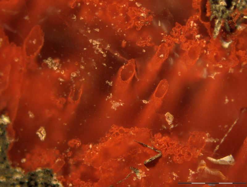 New find could be oldest evidence of life ever discovered