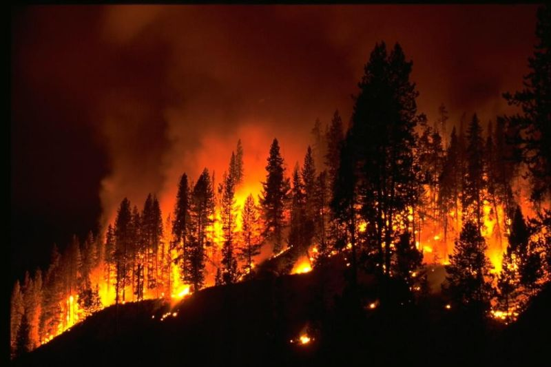 In the US, added wildfires due to carelessness, not just climate change