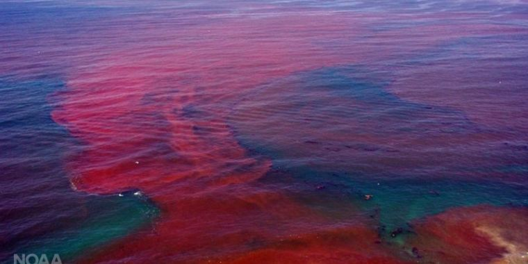 Toxic algae on the rise as our oceans warm