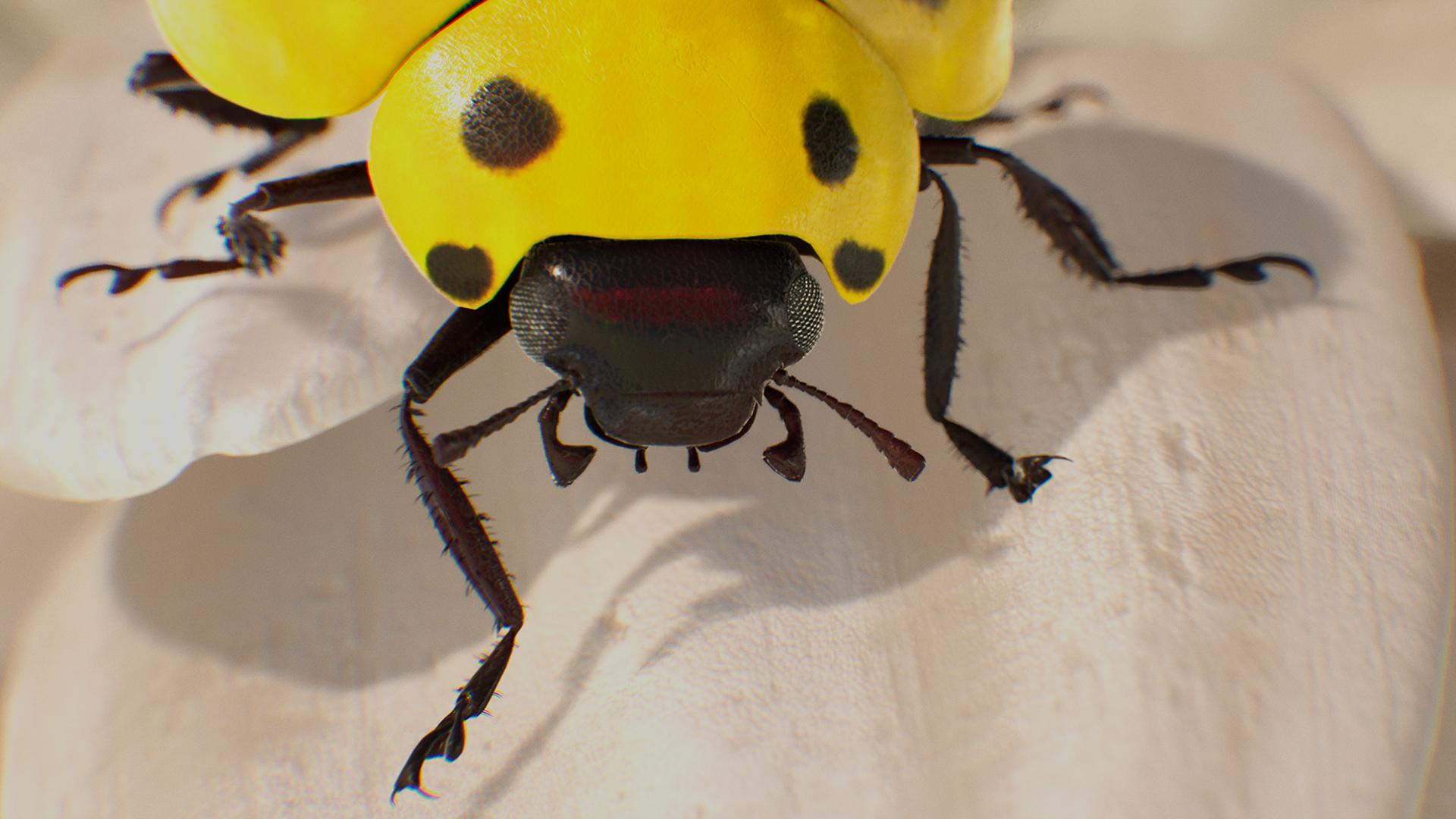 A high-quality ladybug.