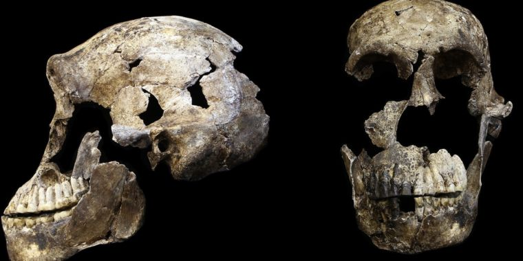Possible human ancestor turns out to have shared Earth with us