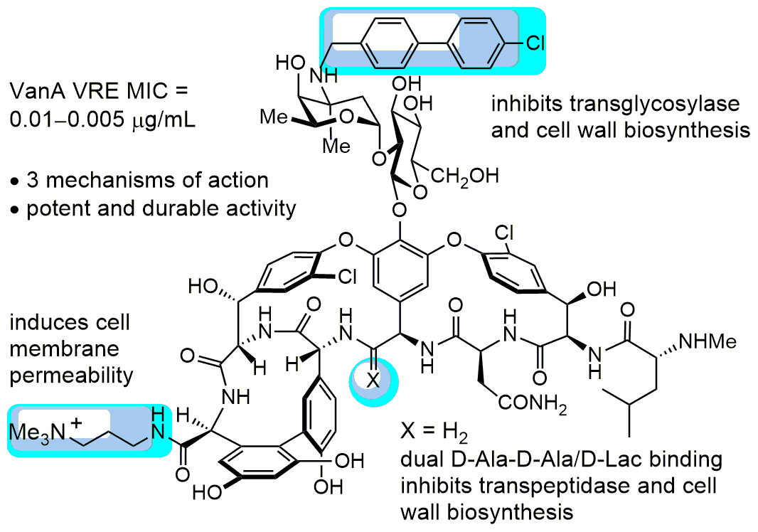 "Three modifications to vancomycin's structure (shown in blue) give it new ""mechanisms of action"" for fighting infection."