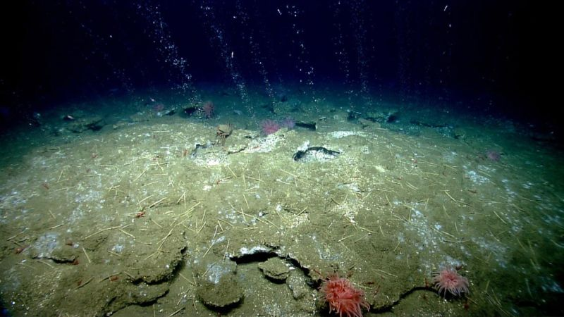 One example of a methane seep (off the coast of Virginia, in this case).