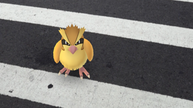 <em>Pokémon Go</em> wasn't the first to put virtual objects like this adorable Pidgey in the real world, but it's probably the best-known software to do so.