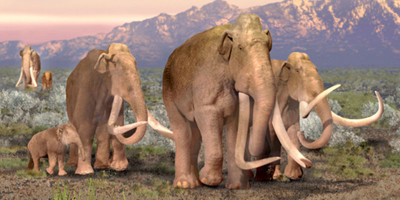 Mammoths.