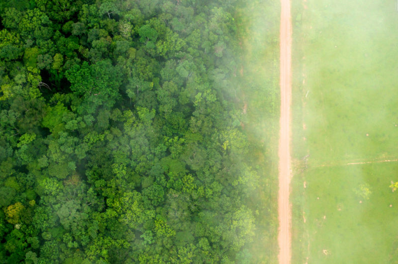 Paying people to preserve forests really seems to work