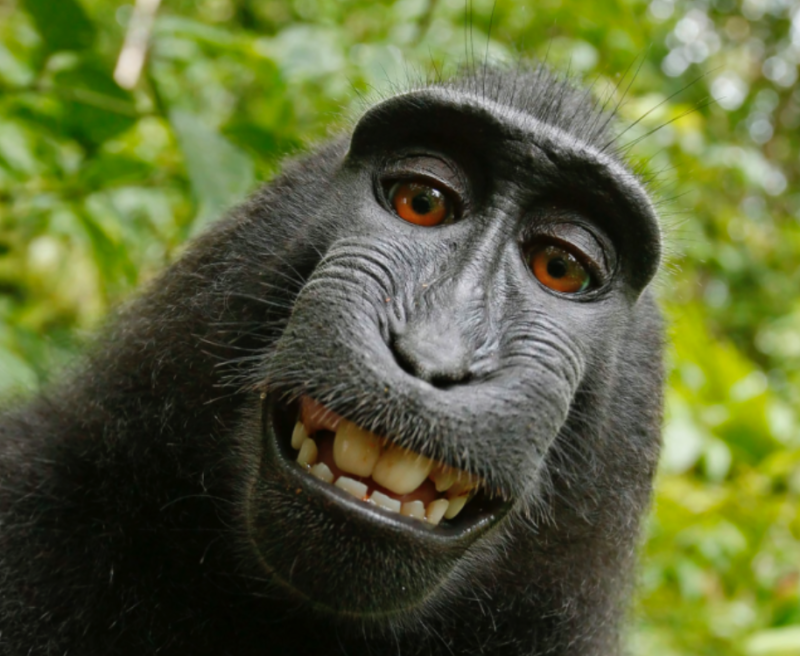 Did you hear the one about a monkey suing a photographer for infringement?