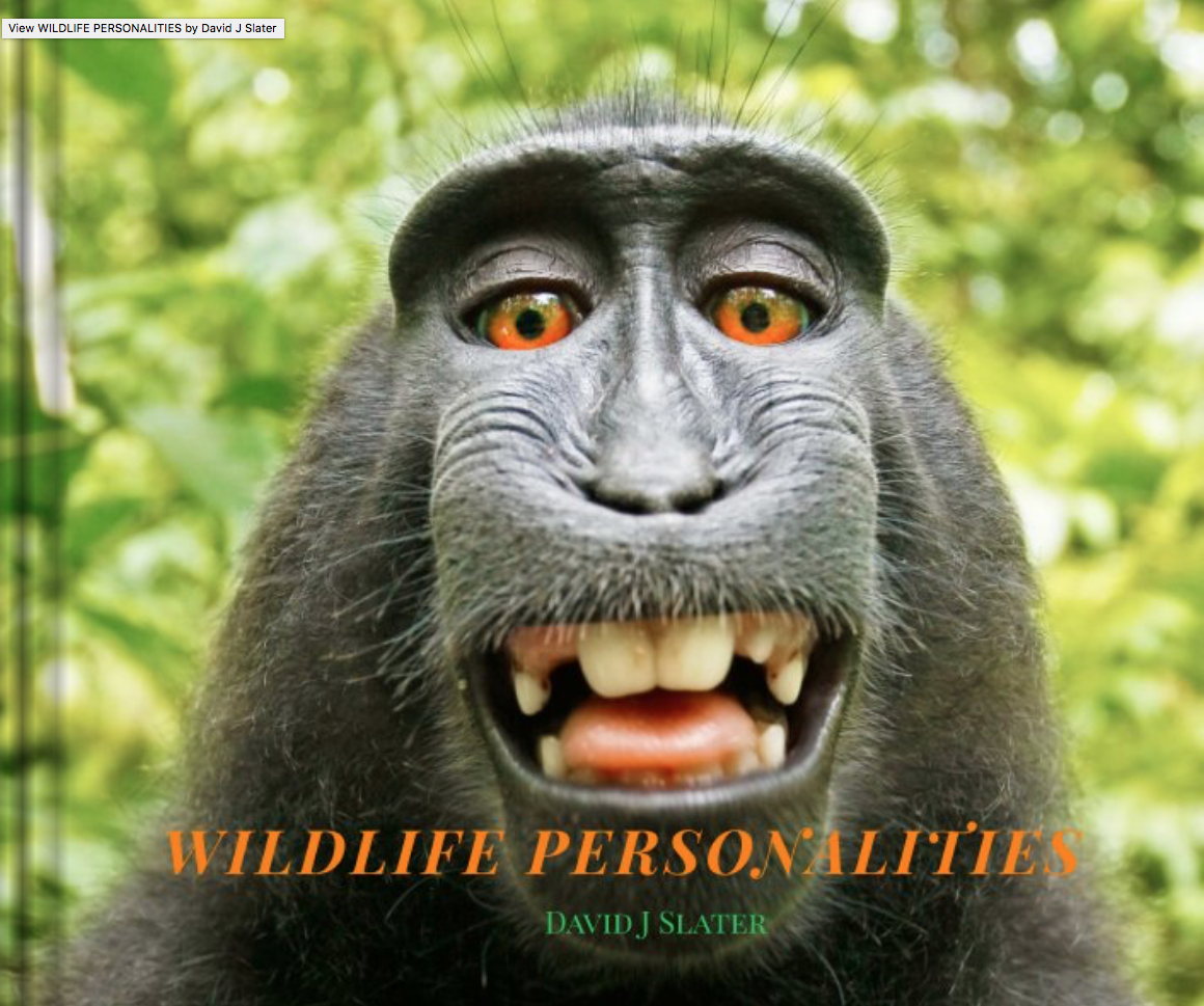 Animal rights? Monkey selfie case may undo evolution of ... - photo#18