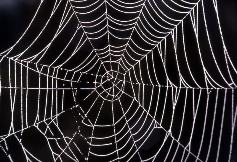 Researchers use lasers to weld spider silk to kevlar