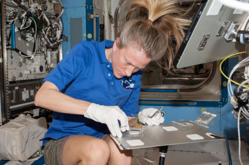 Karen Nyberg, of Expedition 37, works with a plant experiment in the Destiny laboratory of the space station.