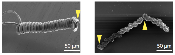 Two of the structures created by zapping spider silk with lasers.
