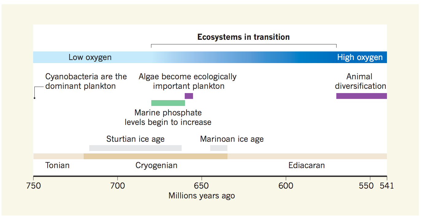 A timeline showing the relationship between Earth's changing geochemistry and the rise of eukaryotic life like algae.