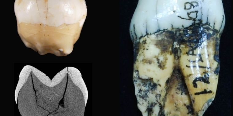 photo image Humans were in Indonesia more than 63,000 years ago