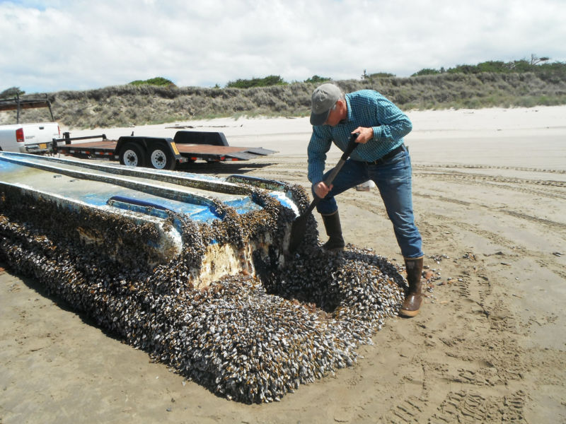 A mussel-covered vessel that washed ashore in Washington.