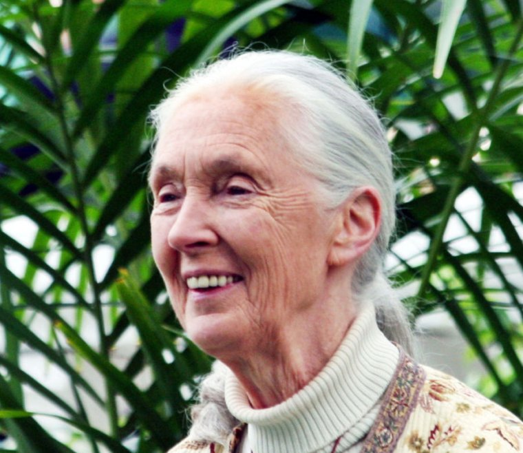 How Jane Goodall became Jane Goodall