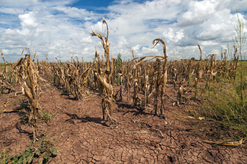 A recent drought in Texas, which led to agricultural losses, has been tied to our warming planet.