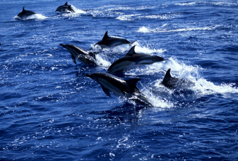 Big brains come with big social groups in whales and dolphins