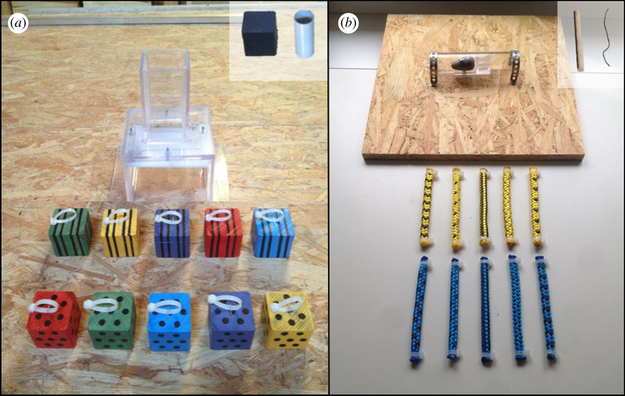 From the paper: (a) Block set: individuals must select a heavy block (weight corresponds with pattern) to insert into the opening of the box to collapse the platform inside. (b) Rope set: subjects must choose a rigid rope (rigidity corresponds with color) to push out the weighted box in the middle of the tube. Training objects for each set are shown in the insets of each image.