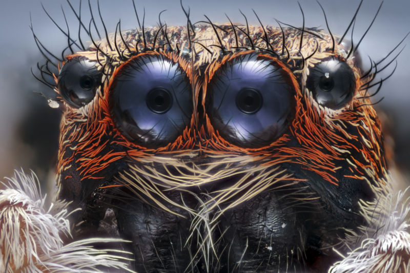 Look carefully into the spider's two largest eyes and you can see internal structures similar to the ones that we've evolved.