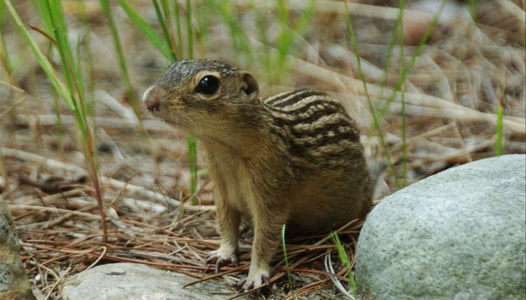 Aww. Well, if the 13-lined ground squirrel doesn't save your brain, maybe it'll warm your heart.