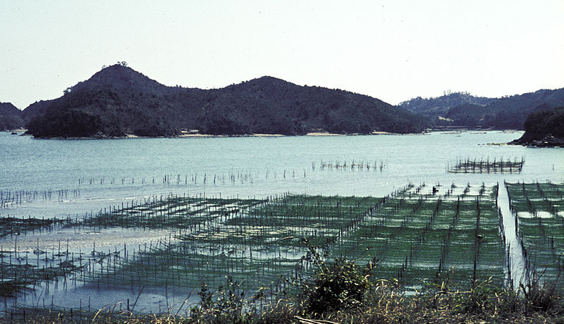 A nori farm off the coast of Japan.