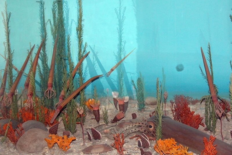 During the Ordovician, life was literally great. Multicellular plants and animals diversified and moved into ecological niches throughout the globe. This is probably what it was like on a typical Ordovician day, hanging out with cephalopods, crinoids, and coral at the edge of a supercontinent that covered the South Pole. I think a colony of graptolites is floating in the distance.