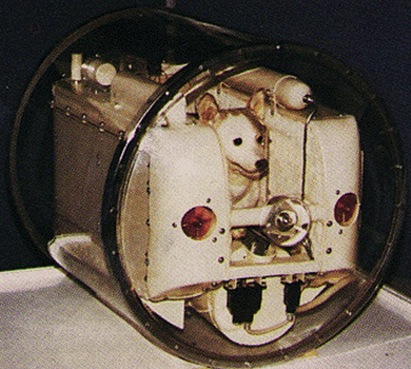Laika, in her carrier that was launched into space.