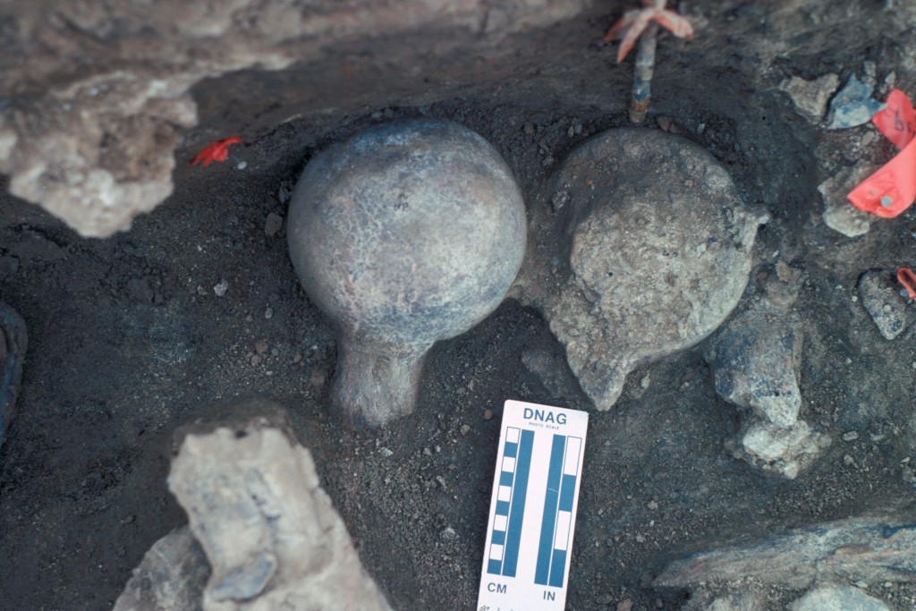 Two mastodon femoral heads.