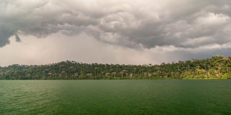 African rainforests vanished for 600 years, then bounced back—why?