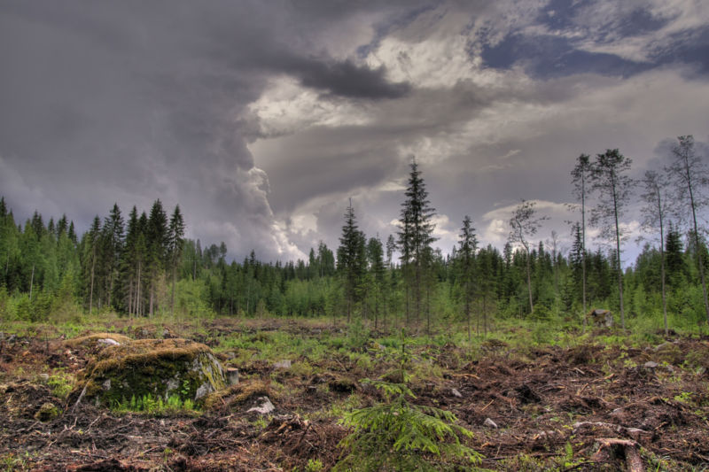 Reforesting would help, but we're still deforesting.