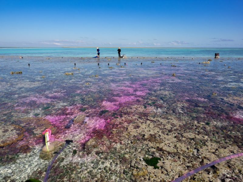 Water carrying a dye and added CO₂ is bubbled over the Great Barrier Reef.